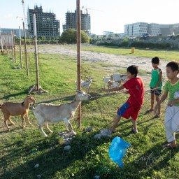 20151230-IMG_3196-kids-and-goats-manila