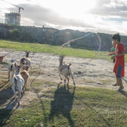 20151230-IMG_3197-kids-and-goats-manila