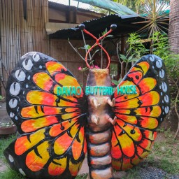 20150217-IMG_5600-davao-city-butterfly-house
