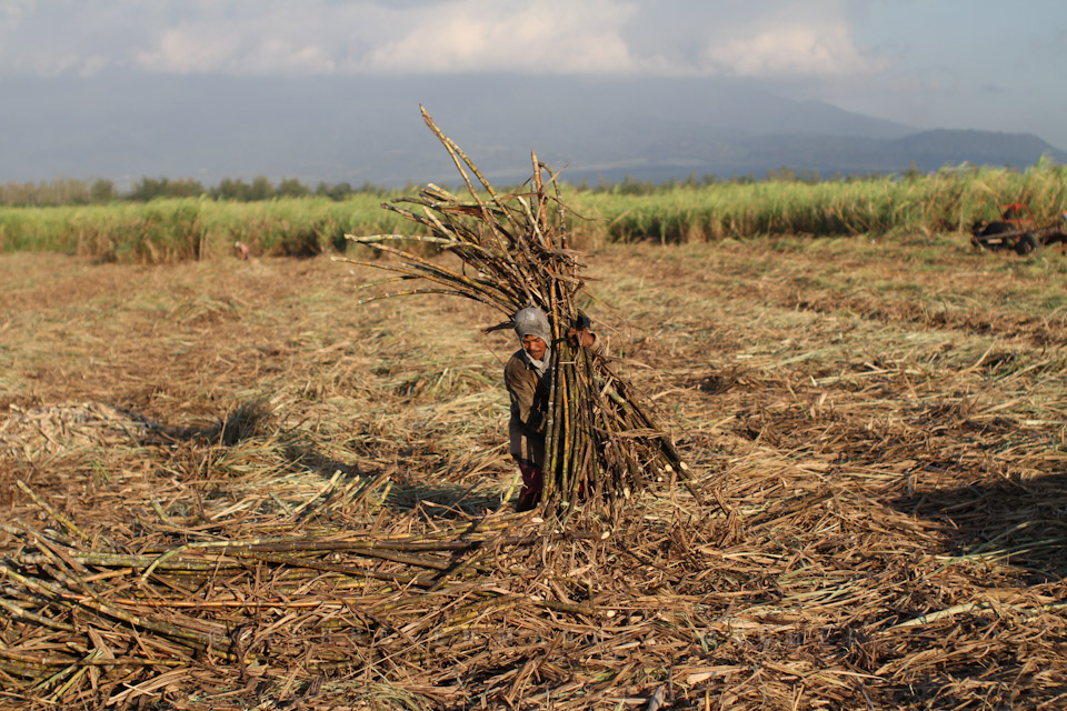 20130227-IMG_7556-sugar-cane-workers-harvest-sacada-pacquiaos