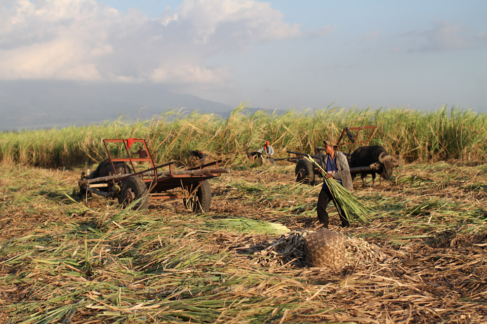 20130227-IMG_7564-sugar-cane-workers-harvest-sacada-pacquiaos