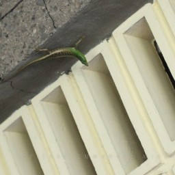 20130208-02-IMG_5720-bacolod-city-street-photography