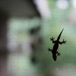 20130221-12-IMG_7265-bacolod-city-street-photography